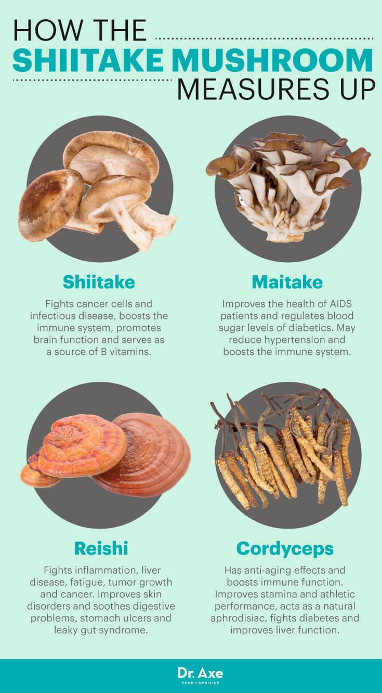 Shiitake Mushrooms vs  Other Mushrooms | AHCC
